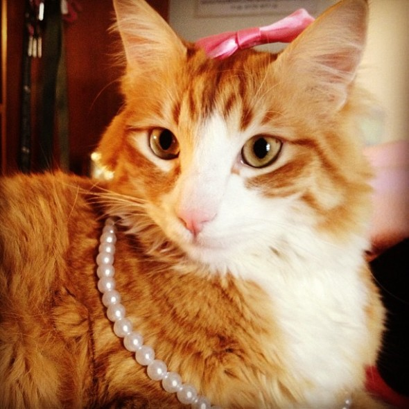 15. Srat cat. TSM.