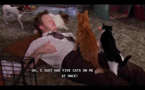Chris Pratt Cats 2