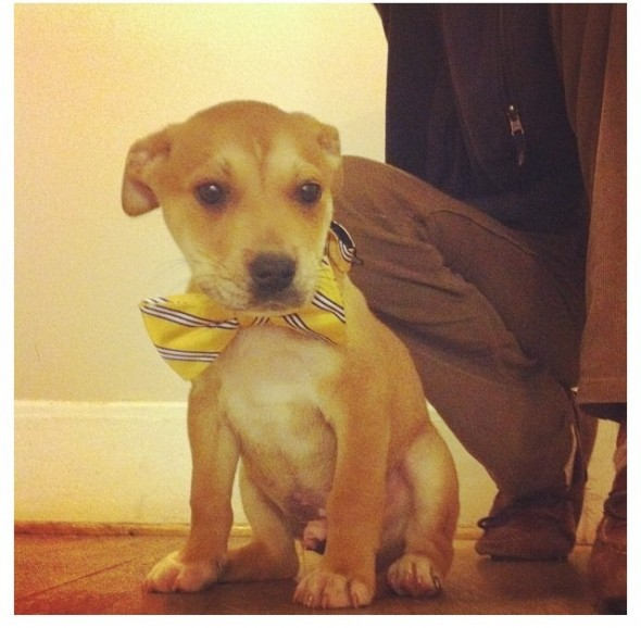 19. Dressing up the frat hound. TSM.