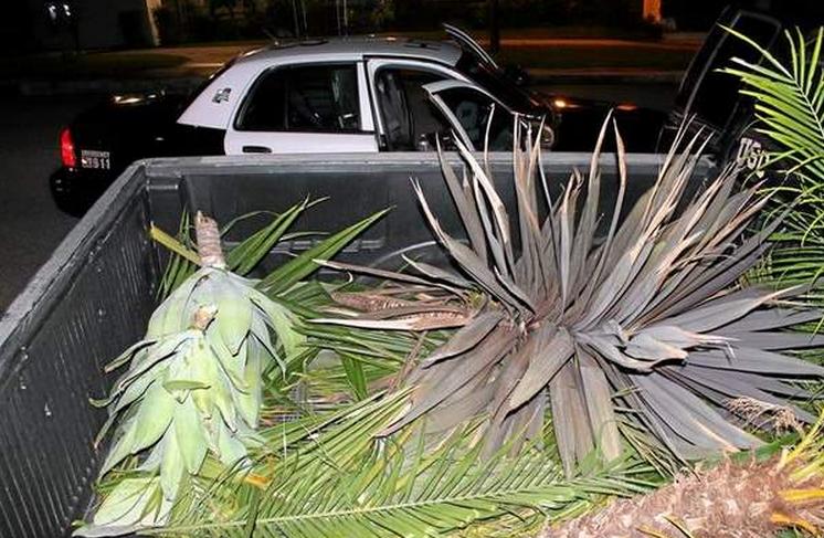 Stolen Plants